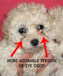 puppy-eye-goop