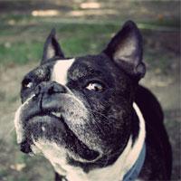 Terrier-ized on My Run